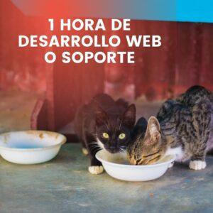 crear fundacion desarrollo web soporte
